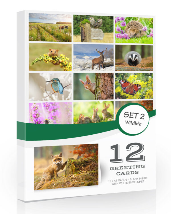 12 x British Wildlife Folding Greeting Cards with Envelopes. Blank Inside for All Occasions